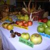 Izložba starih sorti jabuka u Osnovnoj školi